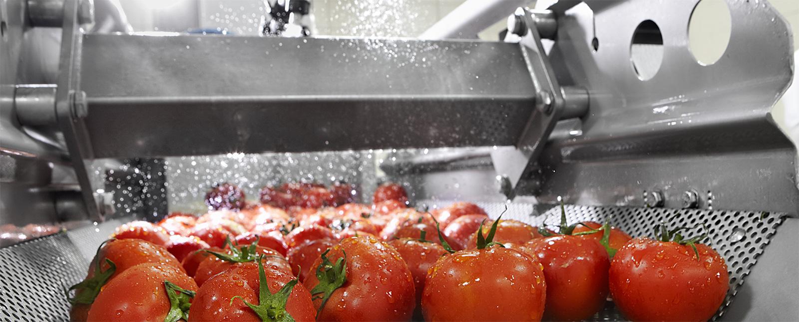 Wonderfil Impianti Pomodori